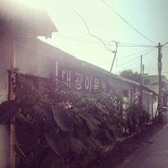 zhi_huiii / #추석 할무니네집 가는길 시간이 멈춰있는거같아 조용해좋아좋아 #picture #landscape #시골 / #골목 #길 #식물 #그곳 / 경기 안성 / 2013 09 19 /