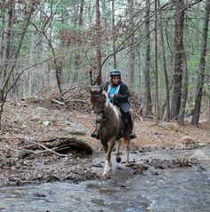 Bella-Grulla,Amber,Champagne,Spotted Saddle trail horse