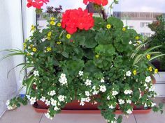 Kwiaty Na Sloneczny Balkon Container Flowers Plants Container Gardening