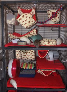 set up rat cage critter nation - Google Search