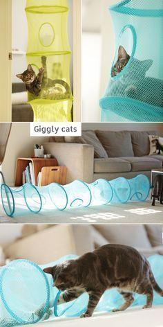 Ikea Aufbewahrung Fangst für Katzen