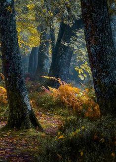 Pace e serenità — coiour-my-world: Le sous-bois! Forest Path, Magic Forest, Tree Forest, Landscape Art, Landscape Photography, Nature Photography, Beautiful Forest, Beautiful Places, Magic Places