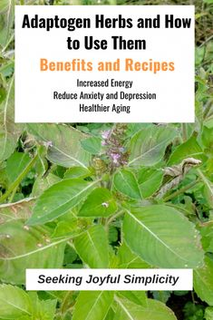 Research demonstrates the many benefits of adaptogen herbs including increased energy, reduced stress, anxiety, and depression, and improved aging. Learn how to use adaptogen herbs and adaptogen recipes. Healthy Skin Tips, Healthy Aging, Healthy Lifestyle Tips, How To Stay Healthy, Holistic Approach To Health, Health And Wellness, Healing Herbs, Medicinal Plants, Herbal Remedies