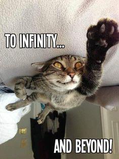 Funny Cat Jokes, Cat Memes, Funny Cats, Funny Animals, Cute Animals, Memes Humor, Hilarious, Crazy Cat Lady, Crazy Cats