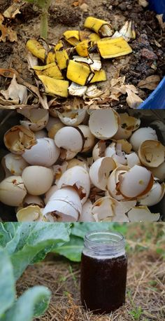 Garden organic waste is most efficiently recycled in compost heaps and there are many benefits to it. Here is how to start a compost heap in your garden. Ab Ins Beet, Organic Insecticide, Homemade Insecticide, Organic Pesticides, Soil Improvement, Organic Gardening Tips, Organic Compost, Urban Gardening, Organic Farming