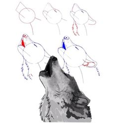 drawn howling wolf step by step - wolf howling at moon sketch Animal Sketches, Animal Drawings, Art Drawings, Wolf Drawings, Moon Sketches, Drawing Sketches, Drawing Tips, Wolf Howling At Moon, Wolf Sketch
