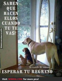 Random Lol funny animal captions AM, Wednesday May 2015 PDT) – 20 pics Funny Couple Pictures, Funny Cartoon Pictures, Funny Dogs, Funny Animals, Cute Animals, Animal Funnies, Baby Animals, Animal Captions, Amor Animal