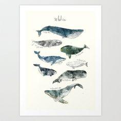 Whales Art Print by Amy Hamilton - $17.00