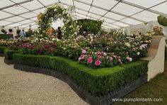 David Austin Roses stand, pictured inside the Festival of Roses Marquee, at the RHS Hampton Court Palace Flower Show Hampton Court Flower Show, Rhs Hampton Court, Garden Arbours, Shows 2017, David Austin Roses, Hedges, Beautiful Roses, Arches, The Hamptons