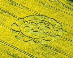 Crop Circles All Cannings Bridge, nr Stanton St Bernard, Wiltshire_ Reported 6th May 2009