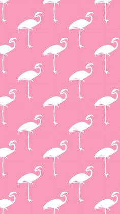 Pink flamingos iPhone wallpaper