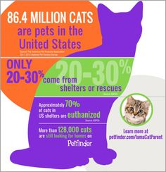 Infographic: How Many Cats Are Adopted in the United States? - Petfinder