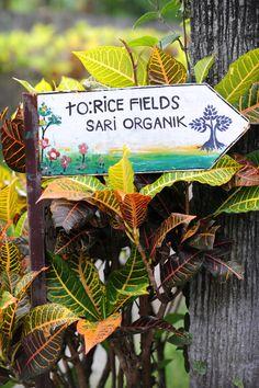 Ubud riisipeltoja   Päivän ensimmäiset suitsukkeet sauhuavat peltotilkkujen reunaan pystytetyistä alttareista. Usva kieppuu ympärillä.   http://www.exploras.net/uudet-tekstit#/balin-maagisin-paikka-on-ubud/