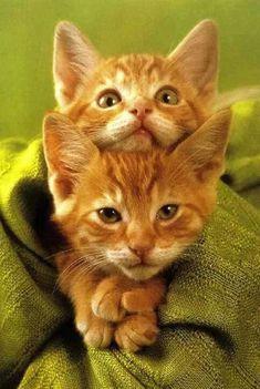 ##cute ##cat ##kitten ##love - 川口明美 - Google+