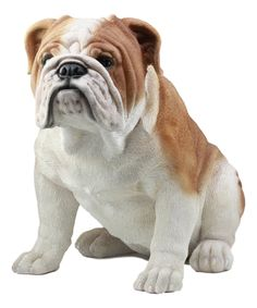 Ebros Large Lifelike Realistic English Bulldog Statue Tall Fine Pedigree Dog Breed Collectible Decor With Glass Eyes -- See this fantastic product. (This is an affiliate link ). Dog Anatomy, Outdoor Statues, Cat Harness, Real Dog, Animal Nutrition, Clay Animals, Bulldog Puppies, Service Dogs, Dog Breeds