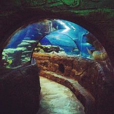 Sea Life London Aquarium- they also do sleepover parties for £25 each minimum group of 10