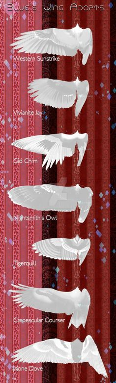 Round 4 I'm sure you're going to note that none of these are real bird wings, thats because they're some designs of mine (from about last year when i was doing this) If you're not buying any of the...