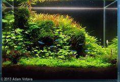 "2013 AGA Aquascaping Contest - Entry #564 5 gal Plants: Hemianthus callitrichoides ""cuba"", Hydrocotyle tripartita, Pogostemon helferi, Anubias sp. Bonsai, Didiplis diandra, Limnophila hipuridoides, Taxiphyllum barbieri ""Java moss"""
