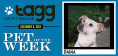 CONGRATS to this week's winner Daina, a loving dog who has come a long way to overcome her fear of people. Thanks to Susan M. for submitting this photo.