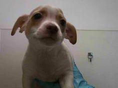 15-00186 Rescue Puppies, Dogs, Animals, Animales, Animaux, Pet Dogs, Doggies, Animal, Animais