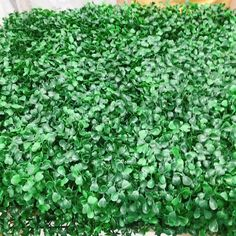Green hedge wall / Boxwood flower wall - The Effective Pictures We Offer You About garden decoration easter A quality picture can tell you - Jardin Vertical Artificial, Artificial Green Wall, Artificial Hedges, Artificial Plants, Artificial Grass Ideas, Indoor Plant Wall, Wall Backdrops, Flower Wall Backdrop, Walled Garden