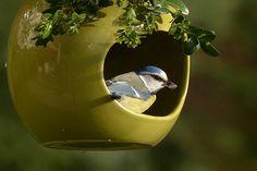 Chapim Azul, Cyanistes Caeruleus, Bird, Pequeno Pássaro