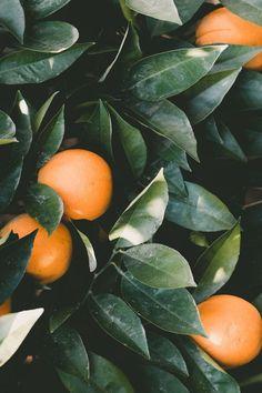 flowers, greenery, plants oranges in an orange tree Plantas Indoor, Orange Aesthetic, Aesthetic Plants, Aesthetic Pastel, Phone Backgrounds, Wallpaper Backgrounds, Iphone Wallpaper, Belle Photo, Color Inspiration