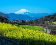 New Mt.Fuji 富士山写真「富士山写真道楽」/フォトライブラリー ストックフォト