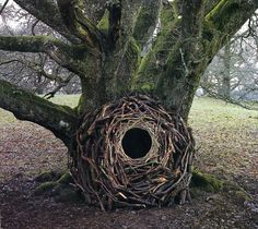 TREES ART-Andy Goldsworthy