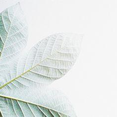 "sausanation: "" Over white #minimal_greece #minimal #minimalismindonesia…"