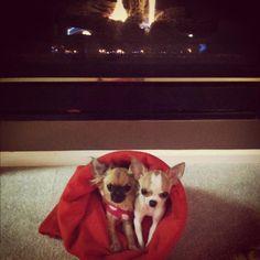 chihuahuas fireplace MY babies! :)