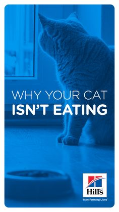 "Does your kitty's lack of appetite have you asking, ""Why won't my cat eat?"" Learn reasons why she may be snubbing her food and tips for getting her to eat. Cat Nutrition, Nutrition Guide, Down Syndrome Cat, Munchkin Cat, Cat Names, Cat Health, Cat Food, Health Problems, Fur Babies"