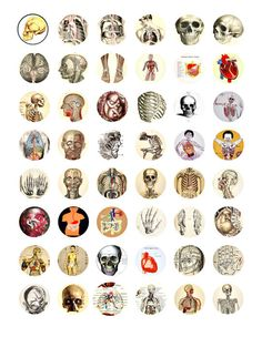 human anatomy medical science collage sheet 1 inch circles clip art digital download images printable graphics craft papers