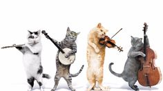Funny Music Videos With Cats