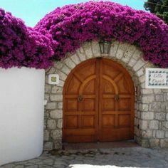 Capri in bloom, entrance to the villa Garden Entrance, House Entrance, Garden Gates, Tropical Landscaping, Backyard Landscaping, Bougainvillea Trellis, Garden Landscape Design, Gate Design, Garden Trellis