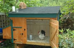 Bantams in Chicken Coop