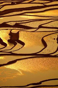 Yunann China, Terrazas de arroz de Honghe Hani