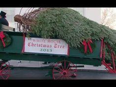 Venerdì è arrivato, come da tradizione, in carrozza, trainato da due cavalli, l'albero di Natale che verrà allestito nella Blue Room della Casa Bianca  http://tuttacronaca.wordpress.com/2013/11/30/un-albero-alto-piu-di-5-metri-per-il-natale-della-famiglia-obama/
