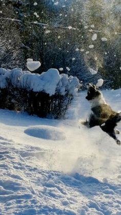 Weeee Snow, Pictures, Outdoor, Photos, Outdoors, Outdoor Games, The Great Outdoors, Eyes, Grimm
