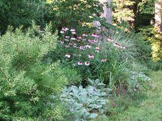 Low maintenance garden ideas in plain english
