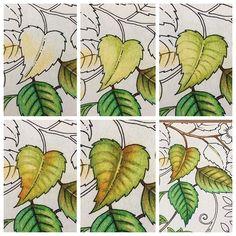 Used: Polychromos faber castell in the colors: may green, earth green yellowish, olive green yellowish, cream, naples yellow, dark chrome yellow, leaf green, orange glaze and burnt siena. ••• #tutorial #colourtutorials #fabercastellpolychromos #stepbystep #art #secretgarden #mijngeheimetuin #jardimsecreto #florestaencantada #hetbetoverdewoud #echantedforest #lostocean #oceanoperdido #deverborgenoceaan #kleurenvoorvolwassenen #coloringforadults #jardinsecret #foretenchantee...