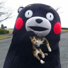 kumamon and a cat