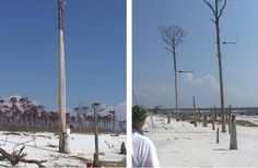"High water marks on East Ship Island, Mississippi, after Hurricane Katrina in 2005. Left: Bark stripped off a tree with salt-burned pine trees in the background (note the 25 ft (7.65 m) long survey rod for scale). Right: Massive beach and over wash erosion illustrated by damaged and snapped pine trees along the beach. Arrows show the the high water mark left by the storm surge. Image credit: Fritz et al., 2007, ""Hurricane Katrina storm surge distribution and field observations on the Mississippi Barrier Islands"" (PDF File), Estuarine, Coastal, and Shelf Science (2007), doi:10.1016/j.ecss.2007.03.015."