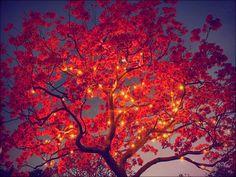 ★ Autumn ☆  - autumn Wallpaper