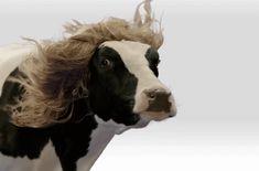 Du hast die Haare schön - http://www.dravenstales.ch/du-hast-die-haare-schoen/