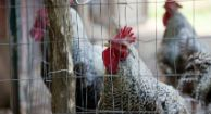 There's currently no reason for anyone to panic over the new H7N9 virus that has infected a handful of people in China.    The World Health Organization has not recommended any travel restrictions for people leaving or entering China, nor is there any evidence to suggest any products from China are contaminated.  http://www.healthline.com/health-news/policy-should-we-worry-about-the-new-bird-flu-040513