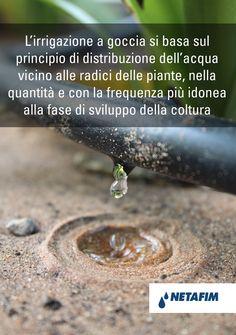 Con l' #irrigazione a #goccia l'efficienza dell'acqua è pari al 95%