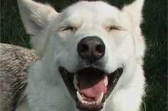Smiling Dog...Chief