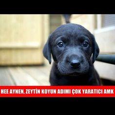 Siyah bir köpek gördüğünüzde hiç tereddütsüz ona zeytin adıyla seslenin, size koşarak geldiğini görürsünüz. #sosyalöküz #öküz #köpek #köpekler #isim #lakap #ad #adı #adım #ismim #zeytin #siyah #kara #kapkara #kömür #tatlı #sevimli #çoktatlı #seni #hayvan #hayvanlar #sevimli #güzel #tatlı #dost #dostum #pazartesi #akşam #akşamı #akşamlar