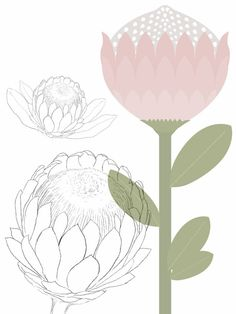 Recent Illustration & Design Work: A Custom Protea-Themed Scrapbooking Pack Botanical Drawings, Botanical Illustration, Graphic Design Illustration, Protea Art, Protea Flower, Australian Wildflowers, Floral Drawing, Fabric Painting, Painting Inspiration